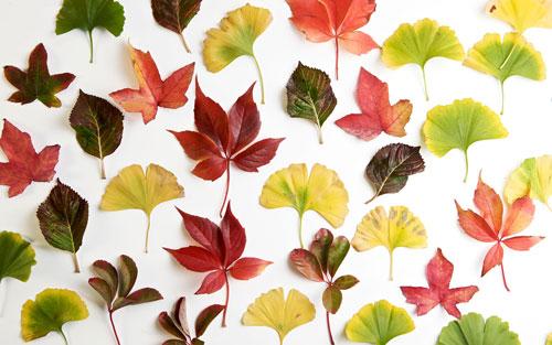 01-61 Растения гербарий