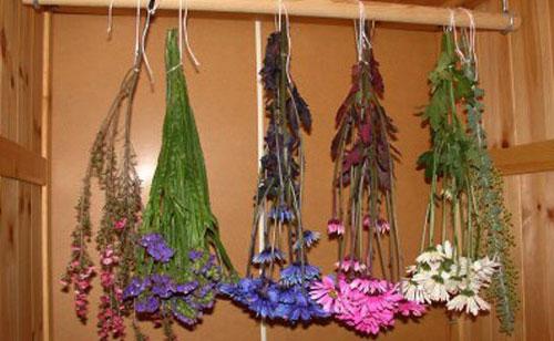 03-59 Как оформить гербарий