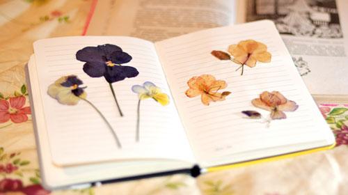 04-56 Как оформить гербарий